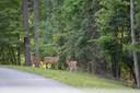 Arrowhead, Dadeville, AL - USA (photo 1)