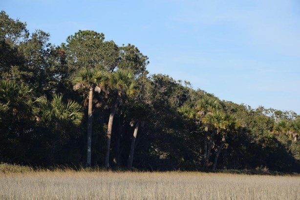 Acreage/Farm Plantation - St. Helena Island, SC (photo 5)