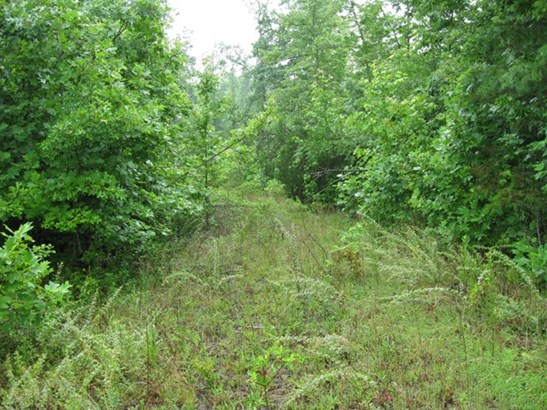 Lots and Land - CRAWFORD, TN (photo 3)