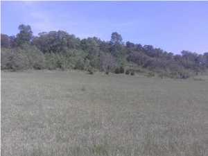 Lots and Land - Birchwood, TN (photo 2)