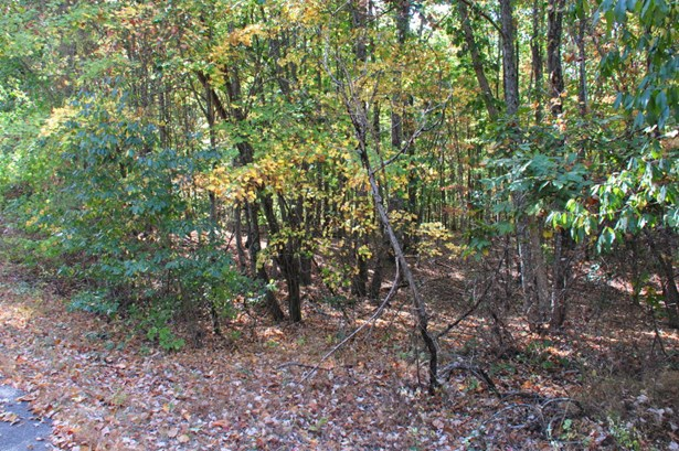 Lots and Land - South Pittsburg, TN (photo 3)