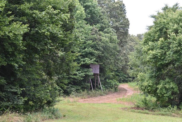 Lots and Land - Whiteville, TN (photo 1)