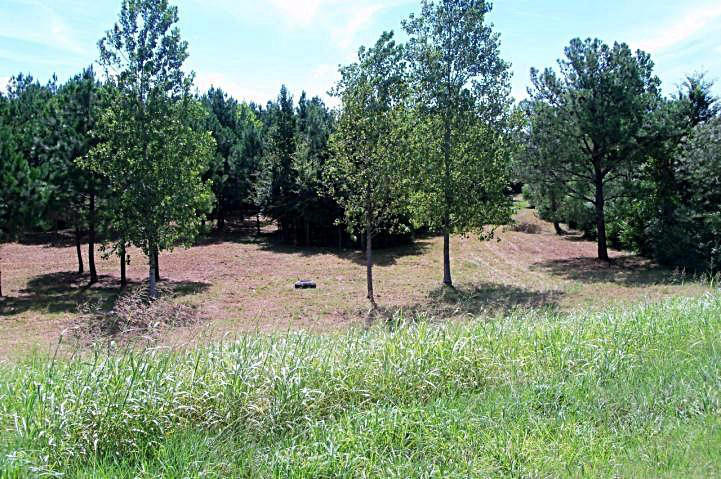 Lots and Land - Booneville, MS (photo 3)