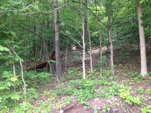 Lots and Land - Dellrose, TN (photo 4)