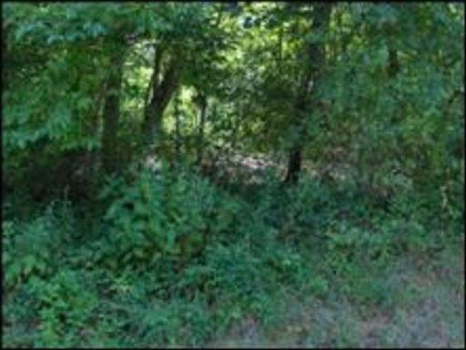 Lots and Land - Oliver Springs, TN (photo 1)