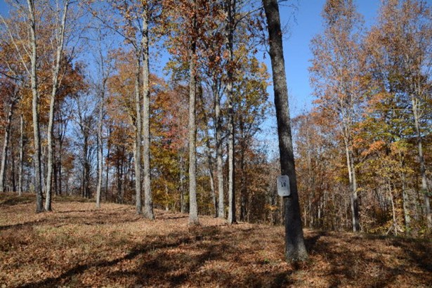 Lots and Land - Hilham, TN (photo 3)