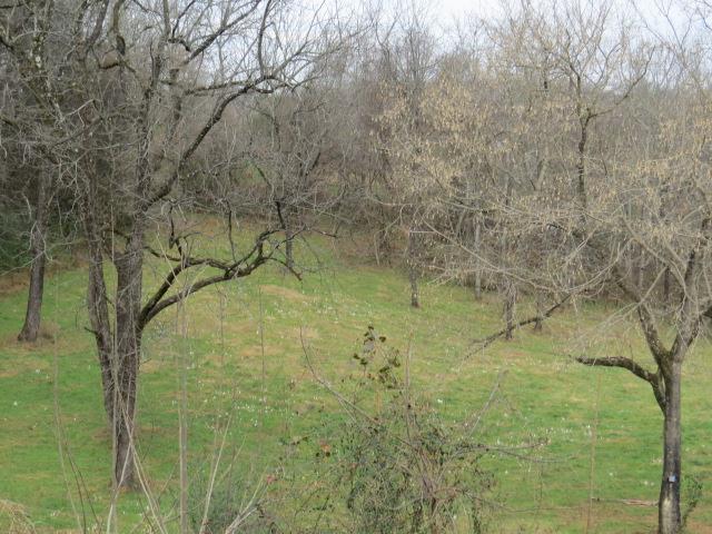 Lots and Land - Pulaski, TN (photo 1)