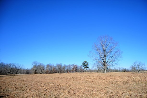Lots and Land - Florence, AL (photo 4)