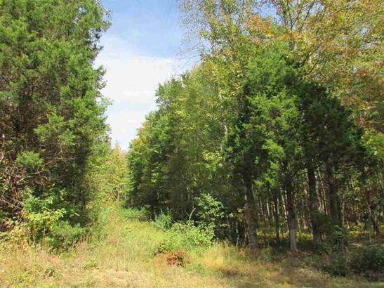 Lots and Land - Cedar Grove, TN (photo 1)