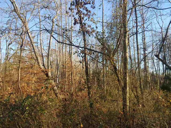 Lots and Land - Holladay, TN (photo 3)