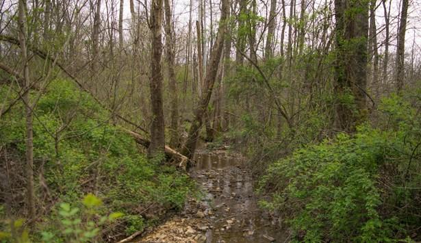Lots and Land - Ethridge, TN (photo 1)