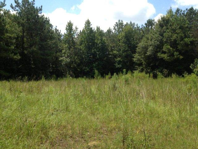 Lots and Land - McCall Creek, MS (photo 2)