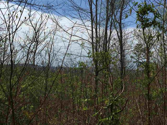 Lots and Land - New Tazewell, TN (photo 4)