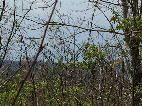 Lots and Land - New Tazewell, TN (photo 5)