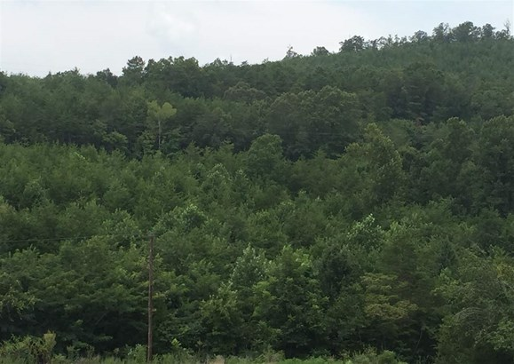 Lots and Land - Lynchburg, TN (photo 1)