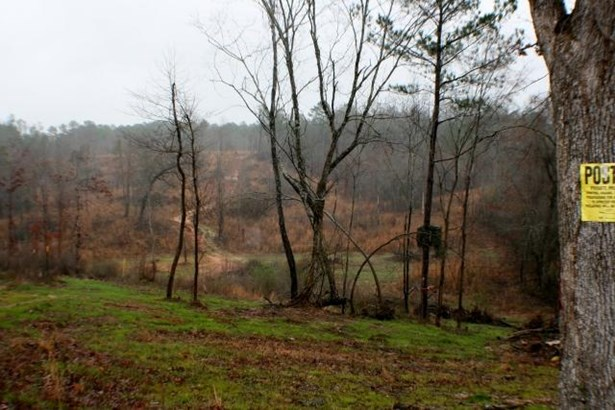 Lots and Land - Fulton, MS (photo 4)
