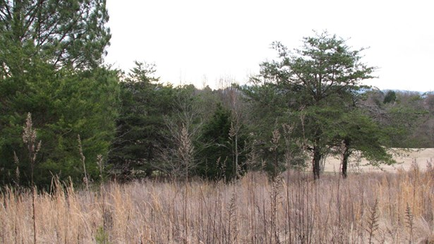 Lots and Land - Vonore, TN (photo 3)