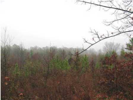 Lots and Land - Collegedale, TN (photo 1)