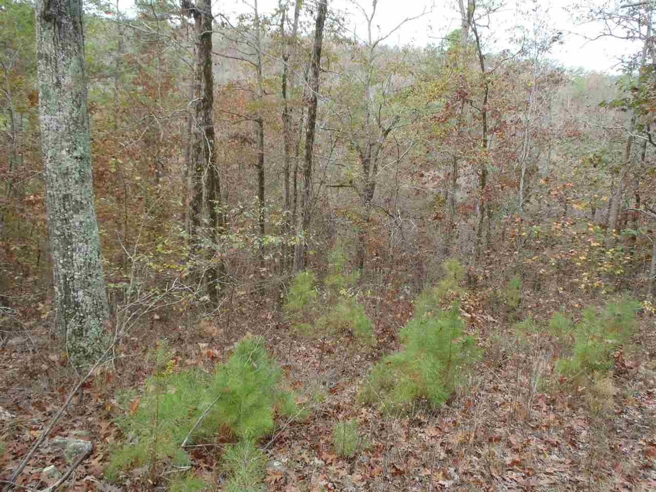 Lots and Land - Mountain Pine, AR (photo 2)