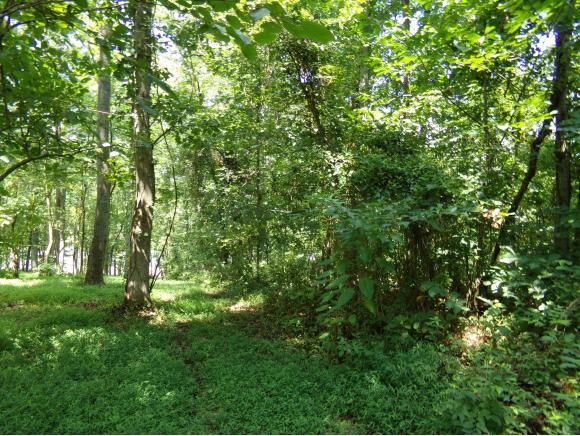 Lots and Land - Gray, TN (photo 2)