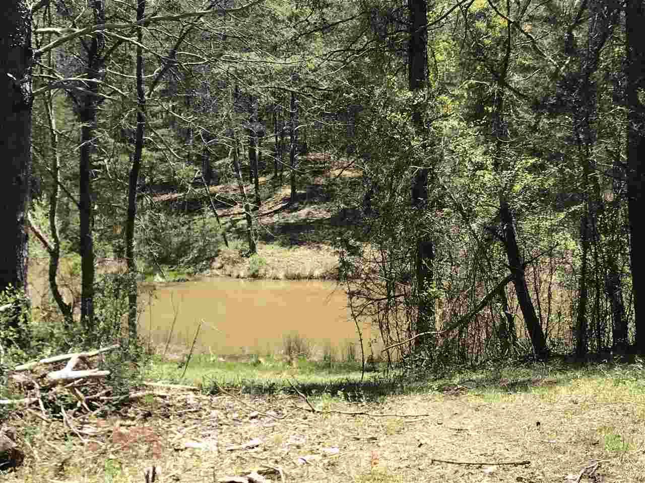 Lots and Land - Chuckey, TN (photo 4)