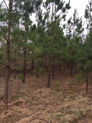 Lots and Land - Tiplersville, MS (photo 2)