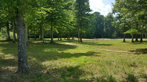 Lots and Land - Decaturville, TN (photo 5)
