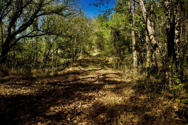 Lots and Land - Sneedville, TN (photo 4)