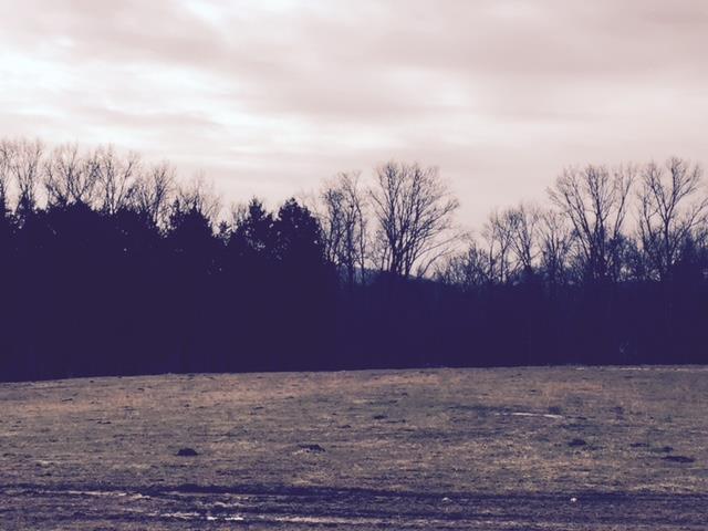 Lots and Land - Arrington, TN (photo 2)
