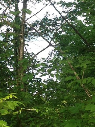 Lots and Land - Cherokee, AL (photo 4)