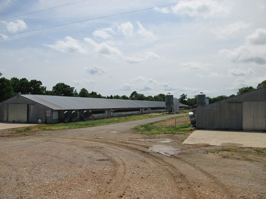 Lots and Land - Maysville, AR (photo 3)