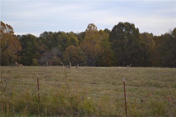 Lots and Land - Decatur, AR (photo 5)