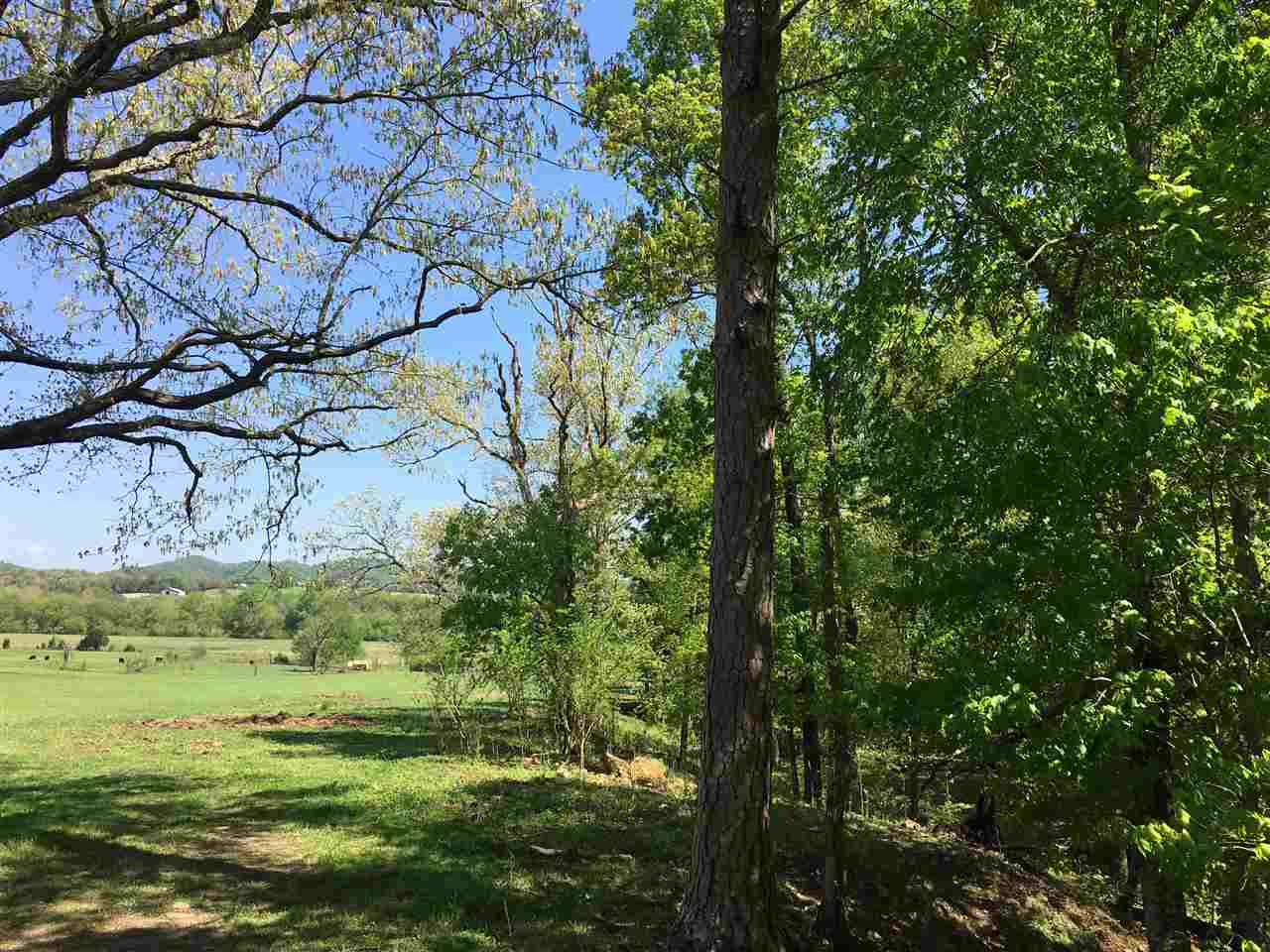 Lots and Land - Etowah, TN (photo 1)