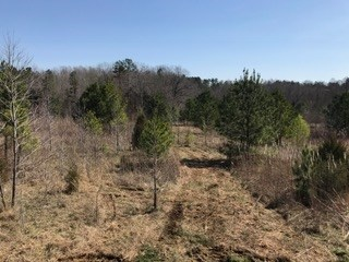 Lots and Land - Bolivar, TN (photo 1)