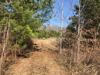 Lots and Land - Bolivar, TN (photo 3)