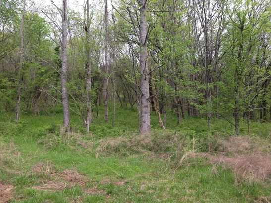 Lots and Land - College Grove, TN (photo 4)