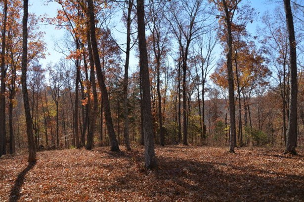 Lots and Land - Hilham, TN (photo 5)