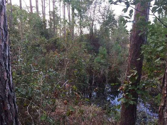 Pervis , Osteen, FL - USA (photo 3)