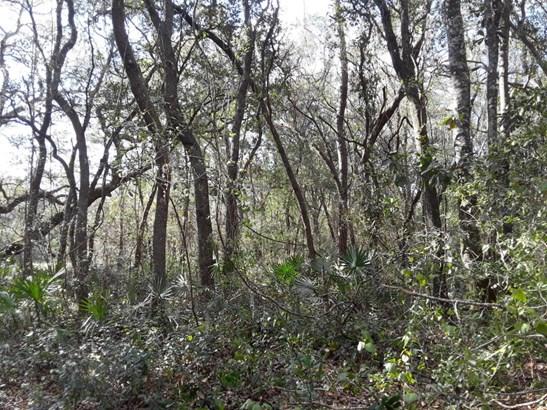 114 Ranchette , Florahome, FL - USA (photo 3)