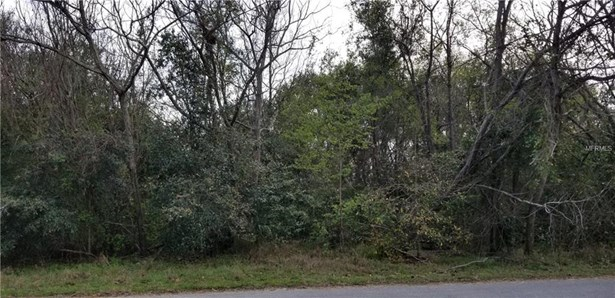 Harbar Oaks , Montverde, FL - USA (photo 2)