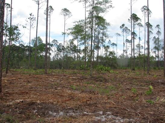 0 Woods 1226 1226, Callahan, FL - USA (photo 3)
