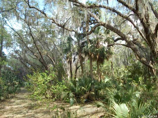 00 Wacahoota , Micanopy, FL - USA (photo 3)