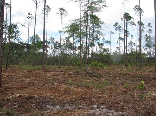 0 Welch 1233 1233, Callahan, FL - USA (photo 3)