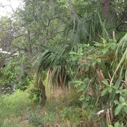 105 Camellia , Satsuma, FL - USA (photo 2)