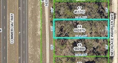 17105 Necklace Warbler , Weeki Wachee, FL - USA (photo 3)