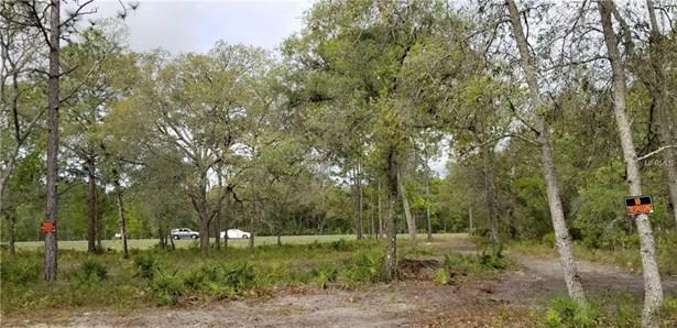 17105 Necklace Warbler , Weeki Wachee, FL - USA (photo 4)