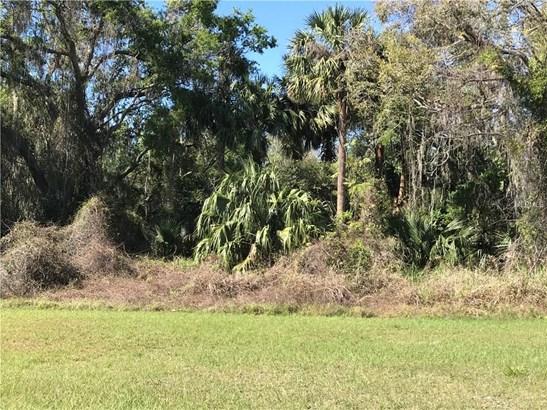 Blue Heron , Tavares, FL - USA (photo 3)