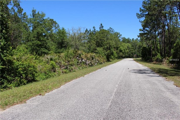 Cashew , Eustis, FL - USA (photo 5)