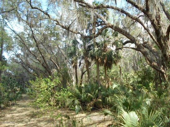 00 Wacahoota , Micanopy, FL - USA (photo 2)