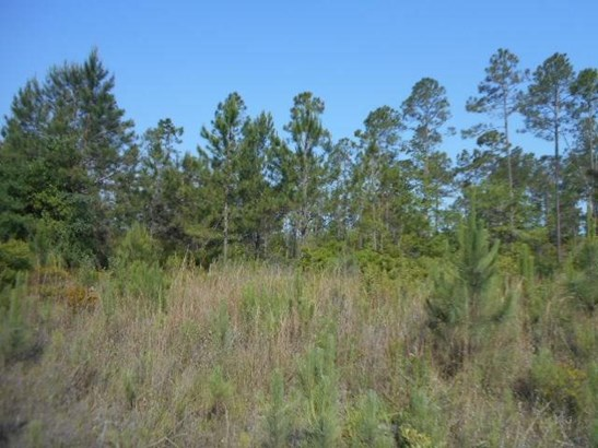 33145 Wiregrass , Callahan, FL - USA (photo 2)